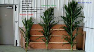 crop length